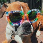 Photographer Pinterest Account