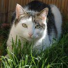 Cat Man Du's Pinterest Account Avatar