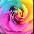 lucklovelight Pinterest Account