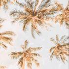 Palm Beach Accessories's Pinterest Account Avatar