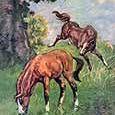 Michelle (HorseAndPony) Pinterest Account