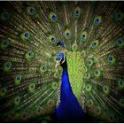 The birds 2014 Pinterest Account