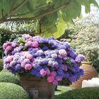 Matson Garden Design Pinterest Account