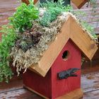 Rebecca's Bird Gardens's Pinterest Account Avatar