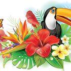 Tropicalware.com Pinterest Account