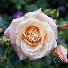 stella rosalind instagram Account