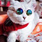 Jupiter Kitty instagram Account