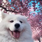 maria visan's Pinterest Account Avatar