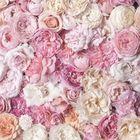 Hyacinthe ... Pinterest Account