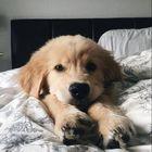 Cute Animals World Pinterest Account