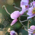 Antique Flower Pinterest Account