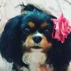 Nelina's Pinterest Account Avatar