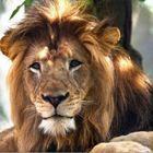 tiger club's Pinterest Account Avatar