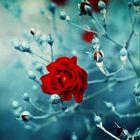 Amrita Upadhye Pinterest Account