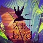 Eden bird instagram Account