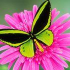 Bonita Washington's Pinterest Account Avatar