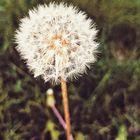 Sanj :) Pinterest Account