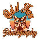 Odd Fox Photography | Arizona Wedding Photographer Pinterest Account