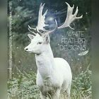 White Feather Designs Pinterest Account