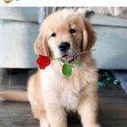 Ashlynn🌹🎀 instagram Account