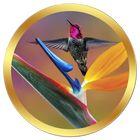 Hummingbird Hangout's Pinterest Account Avatar