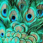 DiYCrAFtS's Pinterest Account Avatar