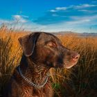 Upland Hunt Pinterest Account