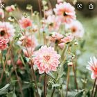 Sophia Parmelee Pinterest Account