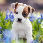 Dogs Daily Pinterest Account