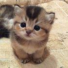 CatsandToys Pinterest Account