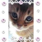 にゃ太郎 Pinterest Account