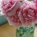 ~❀ Mirabella Bloom ❀~