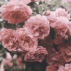 💗antonia💗 Pinterest Account