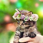 Stefanie Schweitzer | Tier Fotografie | Süsse Tiere 's Pinterest Account Avatar