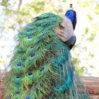 Kandi's Pinterest Account Avatar