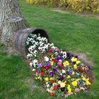 Gardener Pinterest Account