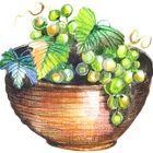 Grapes And Splendor Pinterest Account