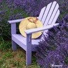 ~ LavenderDiva ~ Pinterest Account