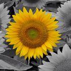 La couleur des belles choses Pinterest Account