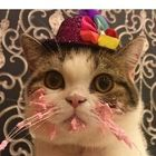 B S Pinterest Account