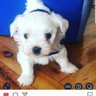 hatice Pinterest Account