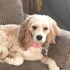 Julie Slade-Kamatchus Pinterest Account