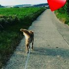 Kerstin Wende Pinterest Account