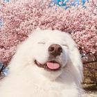 Giau Hanh instagram Account