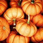 LittlePumpkin Pinterest Account
