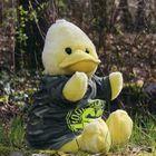 Big B - Big Bird aus Beckum Pinterest Account