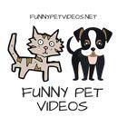 🐶 Funny Pet Videos 🐱's Pinterest Account Avatar