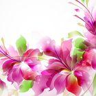 Anka B ☕ Pinterest Account