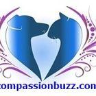 Mycompassionbuzz Pinterest Account