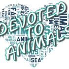 Devoted To Animals instagram Account